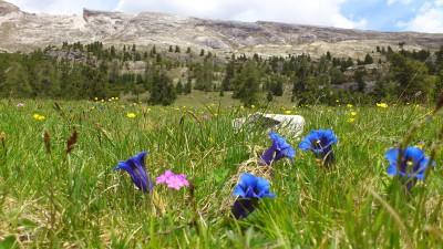 Gebirgsblumen überall auf fast 3000 m